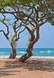 Árboles tropicales del heliótropo con las orquídeas blancas en la playa Imagen de archivo libre de regalías