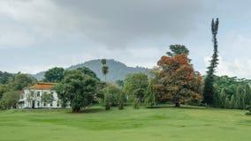 Árboles tropicales en el jardín de Peradeniya imágenes de archivo libres de regalías