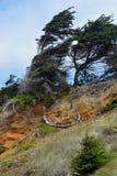 Árboles venteados de la playa Fotografía de archivo