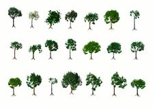 Árboles. Verano Fotografía de archivo libre de regalías