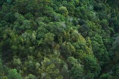 Árboles verde oscuro de la selva Imagenes de archivo