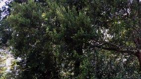 Árboles verdes almacen de video