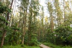 Árboles verdes altos en un bosque en Coney Island, Singapur fotografía de archivo