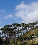 Árboles verdes altos y cielo nublado Imágenes de archivo libres de regalías