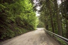 Árboles verdes, camino forestal Imagen de archivo