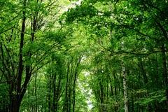 Árboles verdes claros Foto de archivo