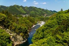 Árboles verdes claros en Chichibu Imagen de archivo