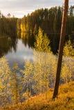 Árboles verdes claros por un lago en luz del sol de la tarde Fotografía de archivo