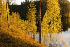 Árboles verdes claros por un lago en luz del sol de la tarde Fotografía de archivo libre de regalías