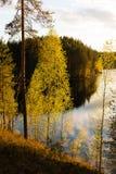 Árboles verdes claros por un lago en luz del sol de la tarde Imágenes de archivo libres de regalías