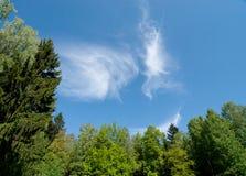 Árboles verdes con el cielo azul Imágenes de archivo libres de regalías