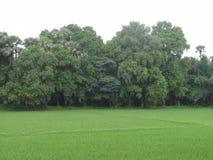 Árboles verdes con los campos verdes Fotos de archivo