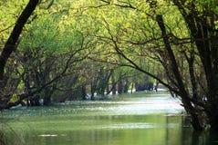 Árboles verdes contra el río Fotografía de archivo