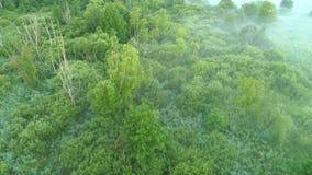 Árboles verdes de la mosca de la opinión aérea de la niebla del paisaje cenagosos metrajes