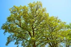 Árboles verdes del resorte fotografía de archivo