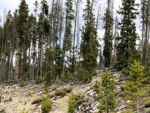 Árboles verdes en bosque en el parque nacional foto de archivo