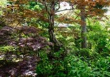 Árboles verdes en el día soleado en verano Fotografía de archivo libre de regalías