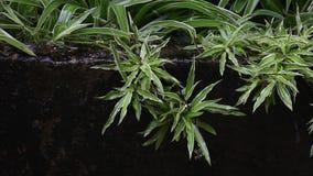 Árboles verdes en el impacto de los muros de cemento del agua de lluvia metrajes