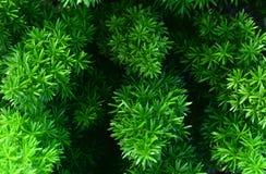 Árboles verdes en el jardín Foto de archivo libre de regalías