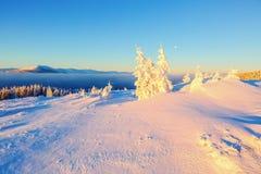 Árboles verdes en los copos de nieve mágicos Imagen de archivo libre de regalías