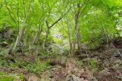 Árboles verdes en paisaje del campo Imagenes de archivo