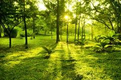 Árboles verdes en parque Fotos de archivo