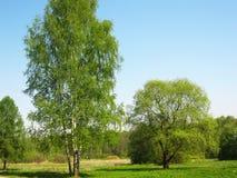 Árboles verdes en un prado Imagen de archivo