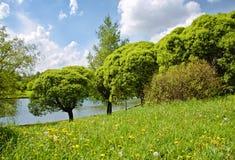 Árboles verdes en una costa del río Fotografía de archivo
