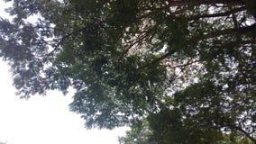 Árboles verdes, hierba, corteza, cielos, ramas Imagen de archivo