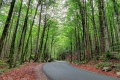 Árboles verdes a lo largo del camino en un bosque esloveno Fotos de archivo