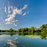 Árboles verdes por el lago en un día asoleado Foto de archivo libre de regalías