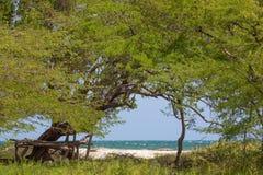 Árboles verdes preciosos en la playa en Jackson Bay fotografía de archivo