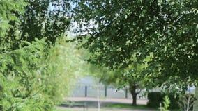 Árboles verdes Un césped hermoso en el día de la sol en parque almacen de video
