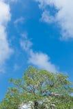 Árboles verdes y cielo azul Imagenes de archivo