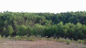 Árboles verdosos Fotografía de archivo libre de regalías