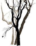 Árboles viejos stock de ilustración