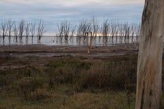 Árboles viejos debajo del agua Imagen de archivo libre de regalías