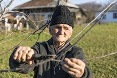 Árboles viejos del ajuste del granjero en su huerta imagen de archivo libre de regalías