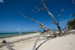 Árboles viejos por el mar Imágenes de archivo libres de regalías