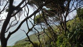 Árboles viejos que se sientan a lo largo del borde de un acantilado escarpado metrajes