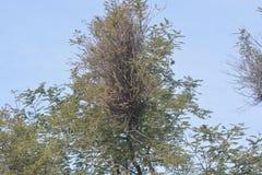Árboles y árbol verdes con el cielo Imagen de archivo libre de regalías