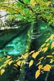 Árboles y agua en el otoño Jiuzhai Foto de archivo libre de regalías