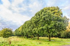 Árboles y arbustos Imagen de archivo