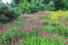 Árboles y arbustos Imagen de archivo libre de regalías