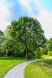Árboles y arbustos Foto de archivo libre de regalías