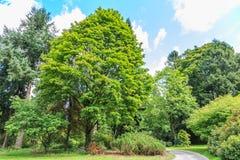 Árboles y arbustos Fotografía de archivo libre de regalías