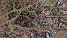 Árboles y arbustos de la poda almacen de metraje de vídeo