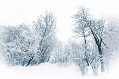 Árboles y arbustos debajo de nevadas fuertes Imágenes de archivo libres de regalías