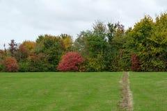 Árboles y arbustos del otoño Fotos de archivo libres de regalías
