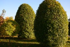 Árboles y arbustos en el diseño del paisaje del jardín Imagen de archivo